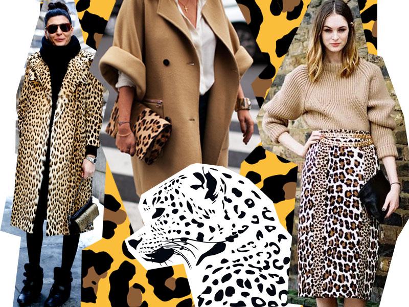 леопард тренд 2017